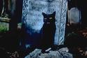 أزياء وأكسسوارات مستوحاة من القطط السوداء