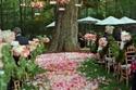 أفكارمذهلة لتزين الأشجار في حفلات الزفاف الجارجية