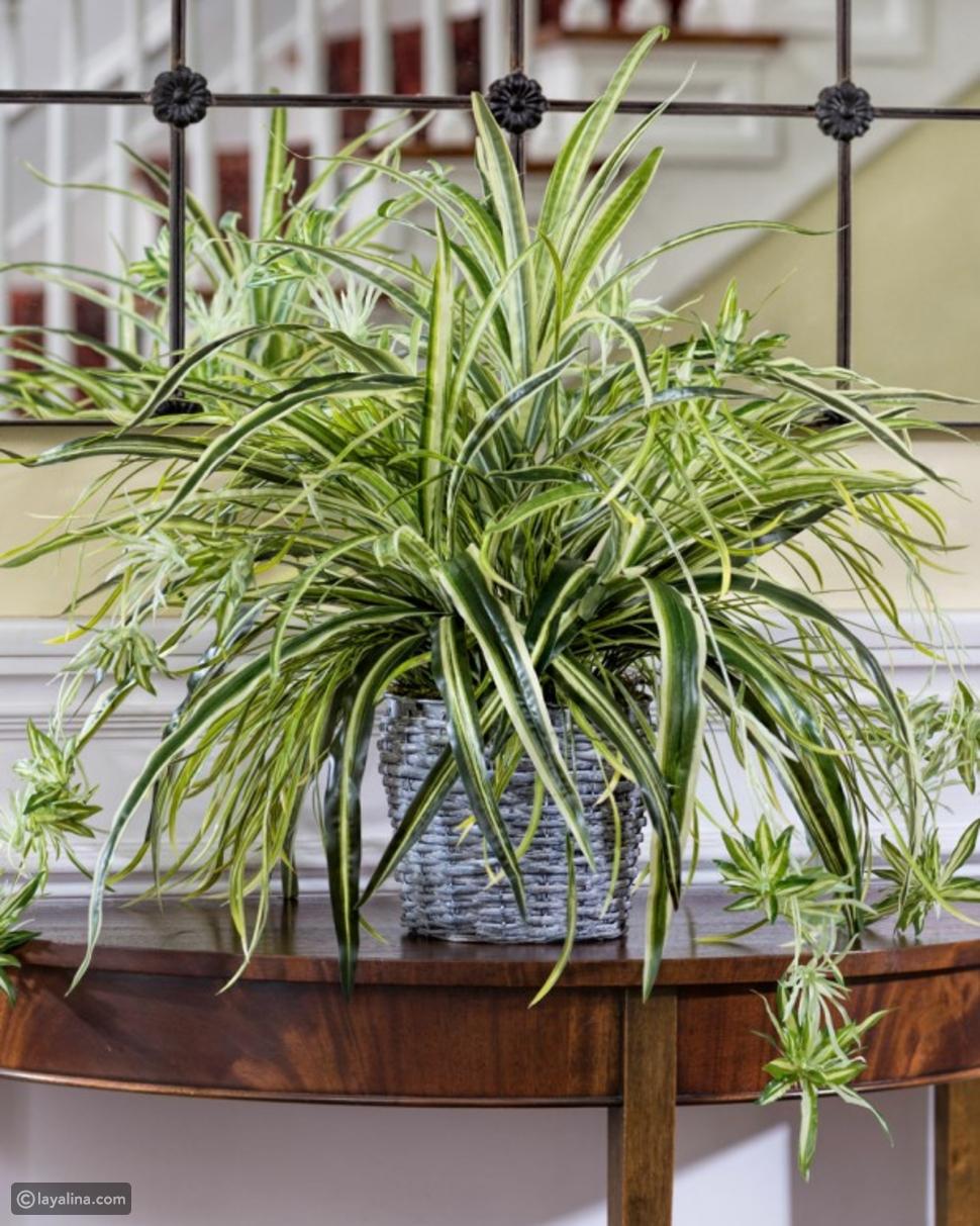 نباتات منزلية داخلية تساعدك للحصول على هواء نقي ونظيف