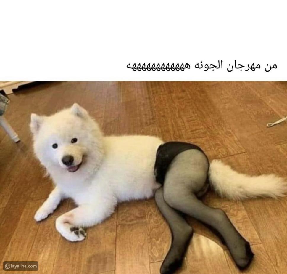 بسبب كلب! اتهامات لهالة صدقي بإهانة زميلاتها في مهرجان الجونة