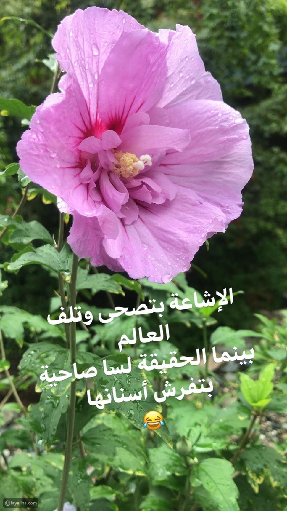 رد أحمد الشقيري على شائعة وفاته
