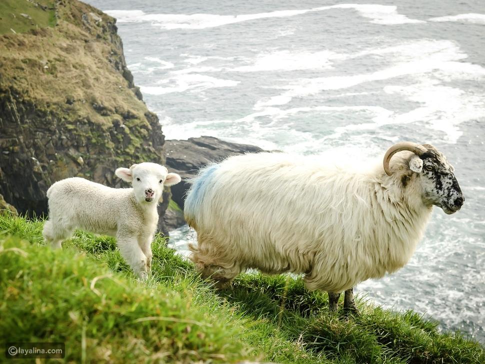 الطبيعة في إيرلندا