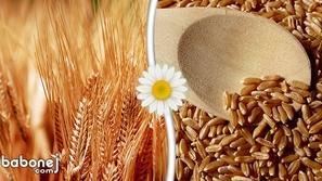 ما هي فوائد القمح للصحة؟