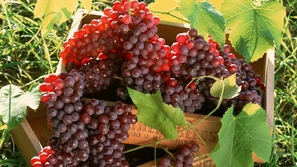 فوائد فاكهه العنب من الألف إلى الياء