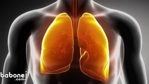 الجهاز التنفسي، أجزائه ووظائفه والأمراض التي تصيبه