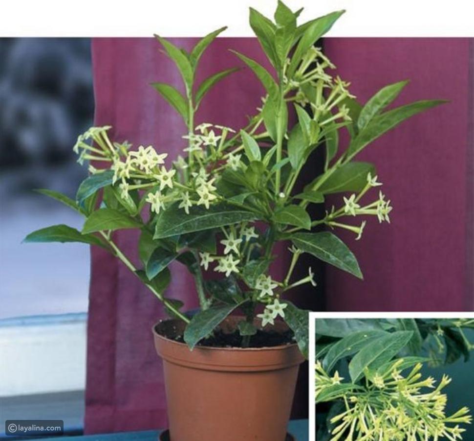 نباتات داخلية جميلة ومزهرة وعطرية