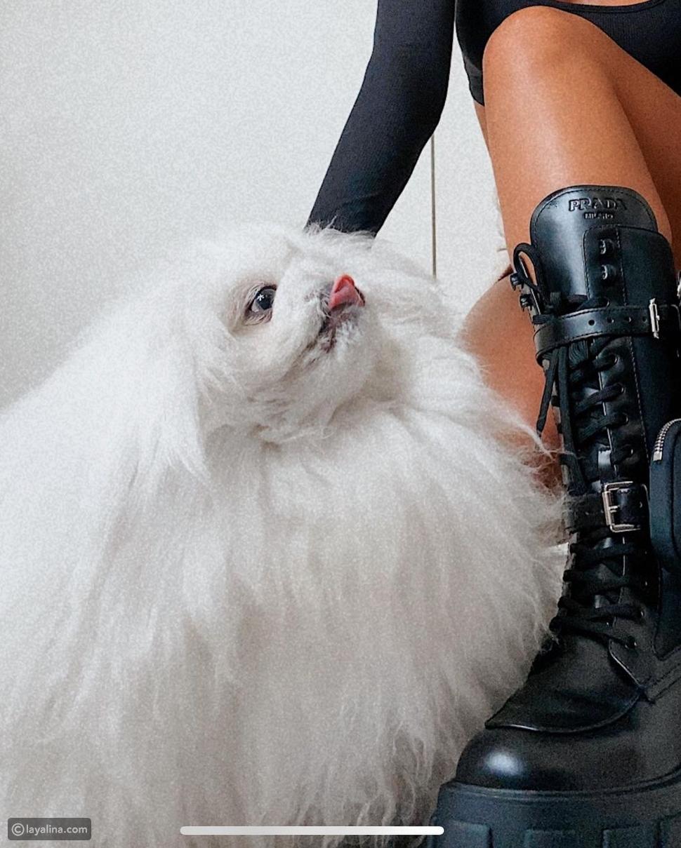 مودل روز تشعل إنستقرام بجلسة تصوير جريئة مع كلابها
